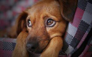Czy wizyta weterynaryjna może przebiegać bez stresu u Psa?