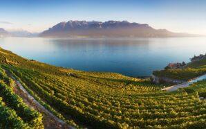 Regiony Francji i Włoch, z których pochodzą najlepsze wina